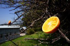 プレゼントのオレンジ